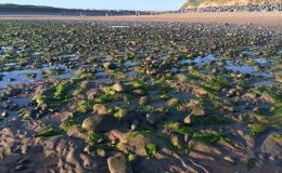 Seaweed Lahinch beach