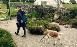 herb walk BNS