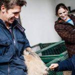 The Farmyard - brushing a rabbit